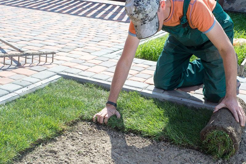 Landscaping Sod